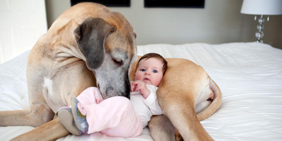 Нередко этиология аллергии у ребенка связана с домашними животными