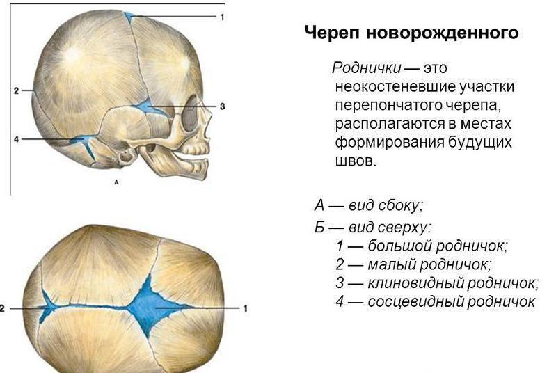 Расположение родничков на черепе малыша