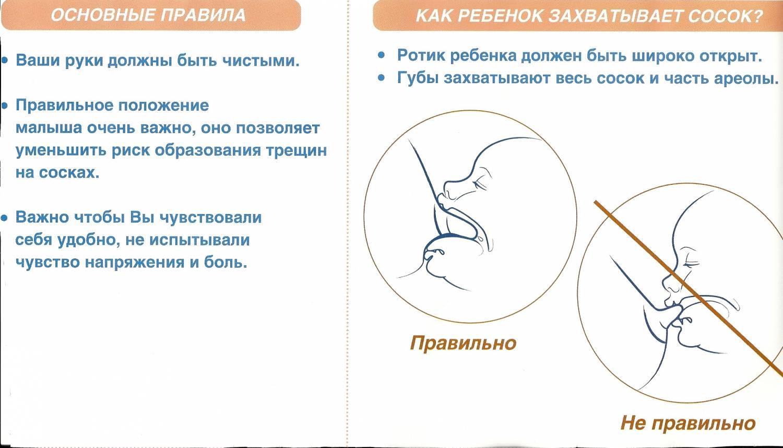 Основные правила успешного прикладывания к груди