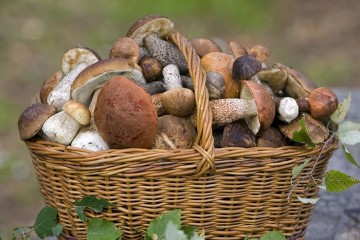 Лесные грибы можно предлагать только детям старшего возраста