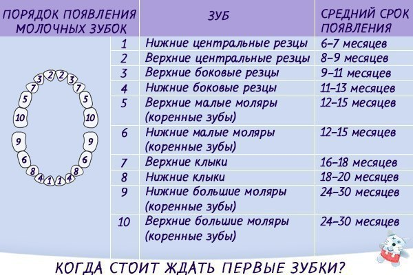 Сроки появления и название молочных зубов