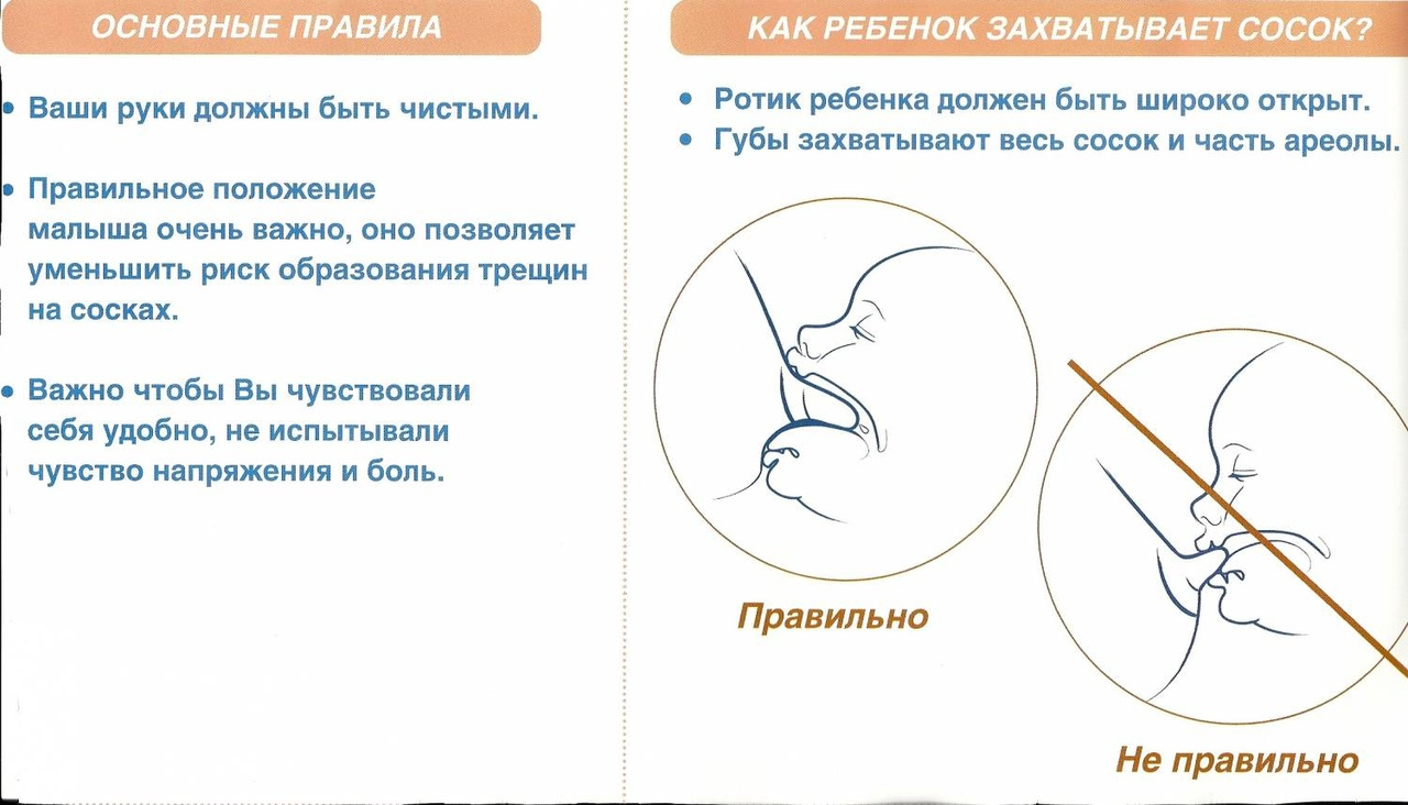 Схема и правила прикладывания к груди