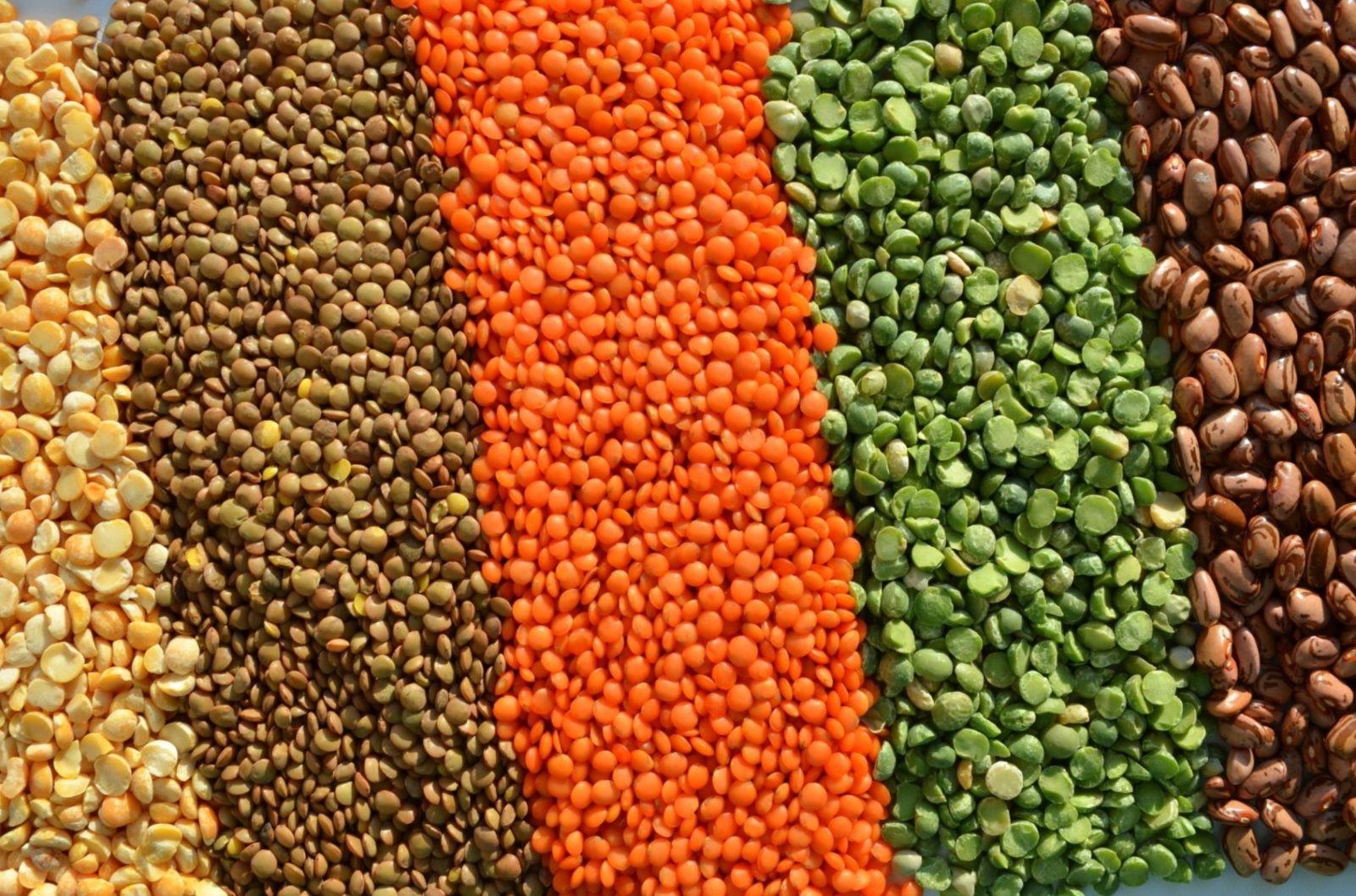 Чечевица – полезный и питательный продукт