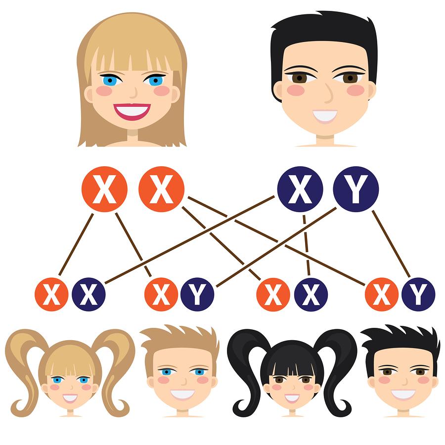 Как могут сочетаться хромосомы родителей