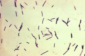Так выглядят микроорганизмы под увеличением