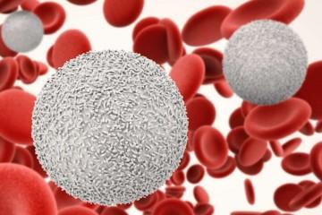 Белые кровяные тельца устраняют инородные образования, к которым относятся инфекции и воспаления