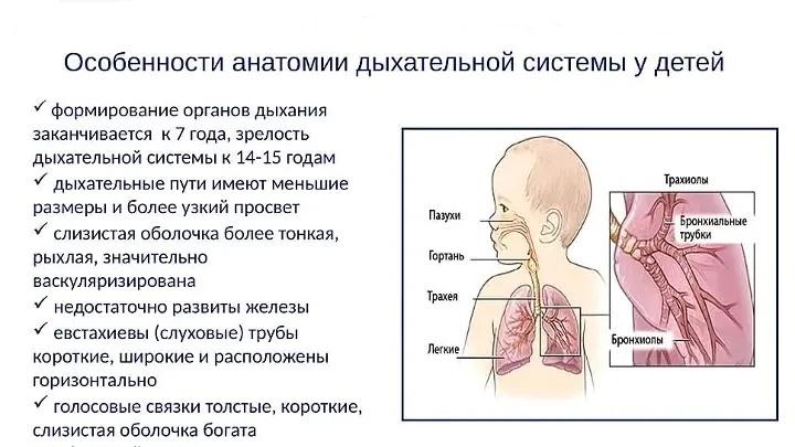 Дыхательная система у малышей