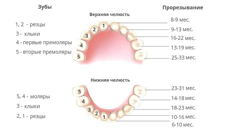 Порядок пополнения зубного ряда