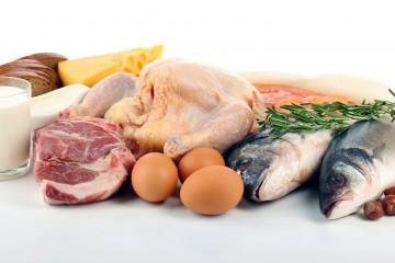 Источники животного белка