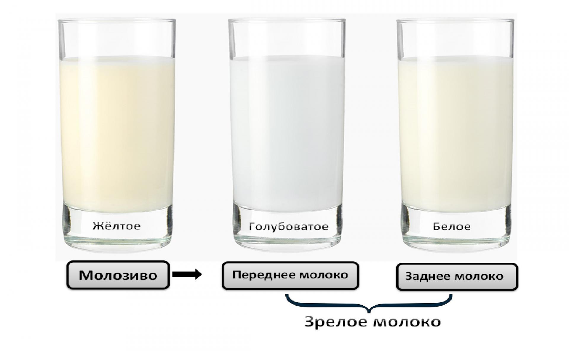 Внешнее различие видов грудного молока