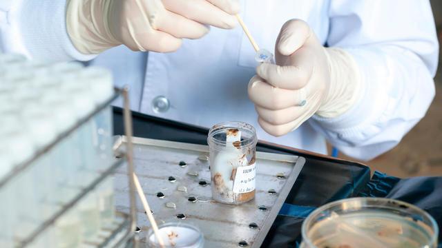 Проведение лабораторных исследований кала