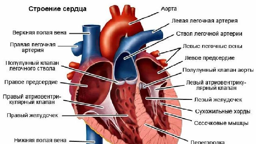 Факторы, вызывающие шумы, зависят от анатомического строения органа