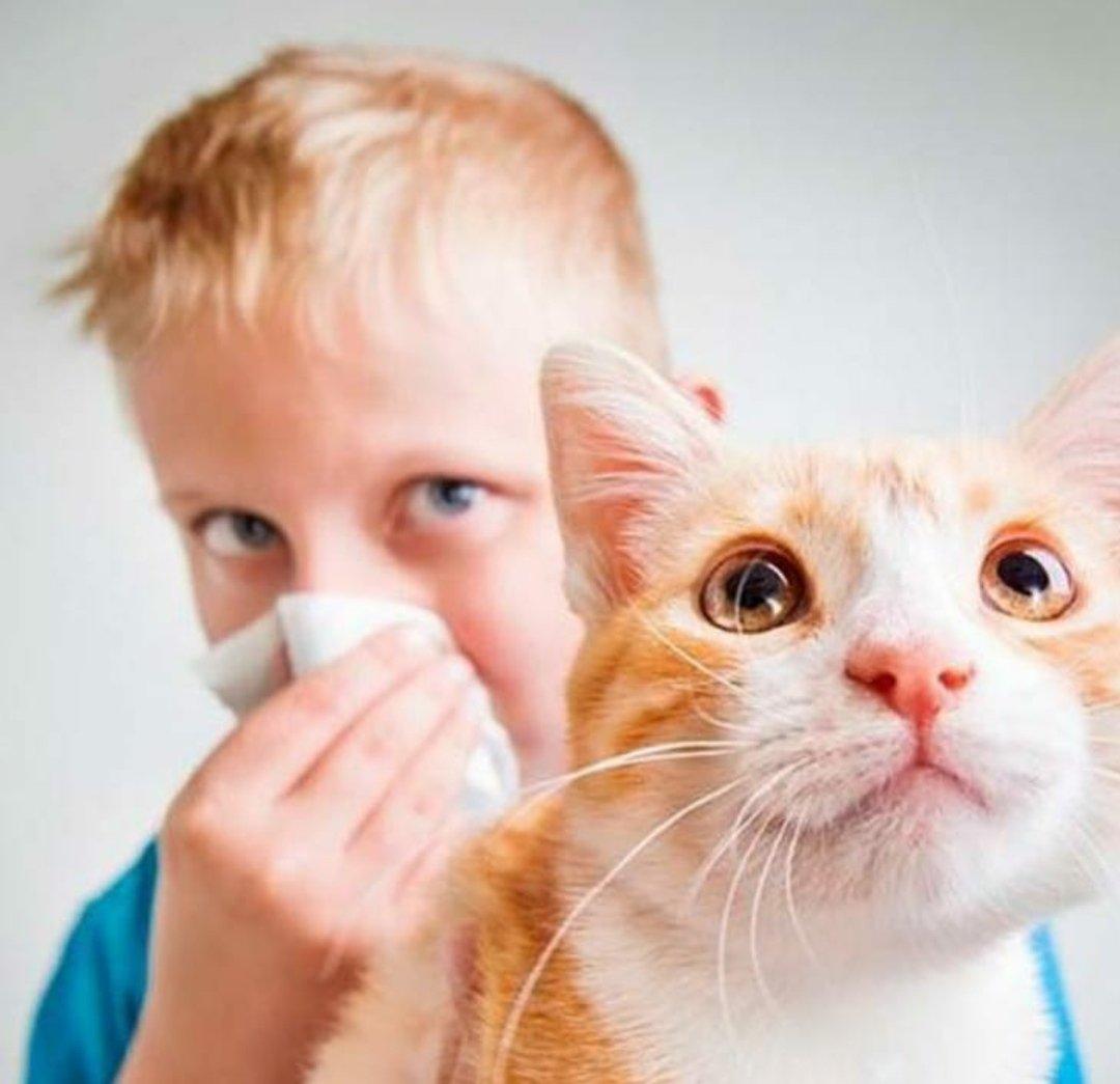 Аллергия на домашнего питомца может проявиться в любом возрасте