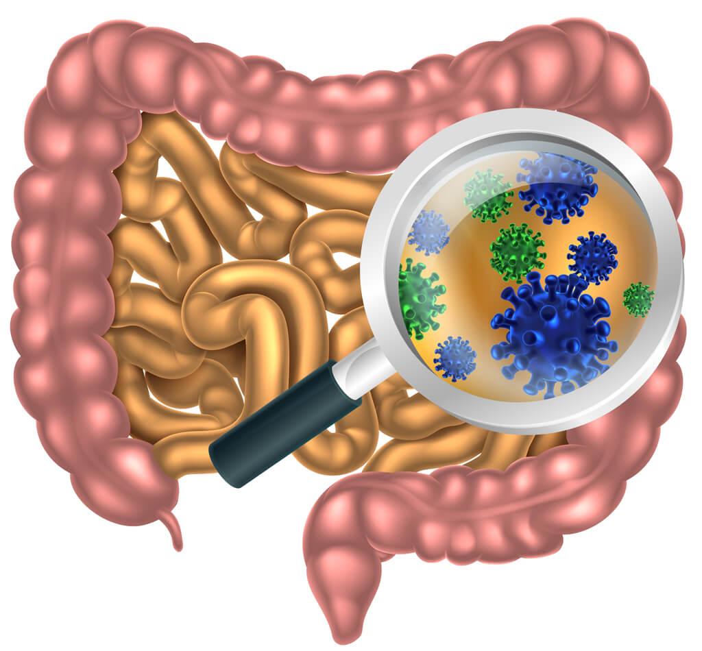 В организме малыша большое количество полезных бактерий, которые помогают процессам пищеварения и ведут борьбу с патогенными микроорганизмами