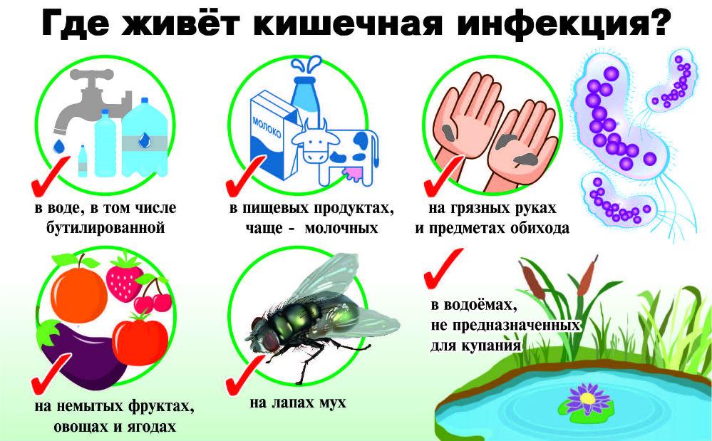 Патогенные организмы находятся на привычных предметах и продуктах