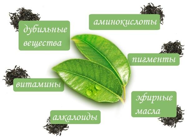 Основные компоненты чайного листа