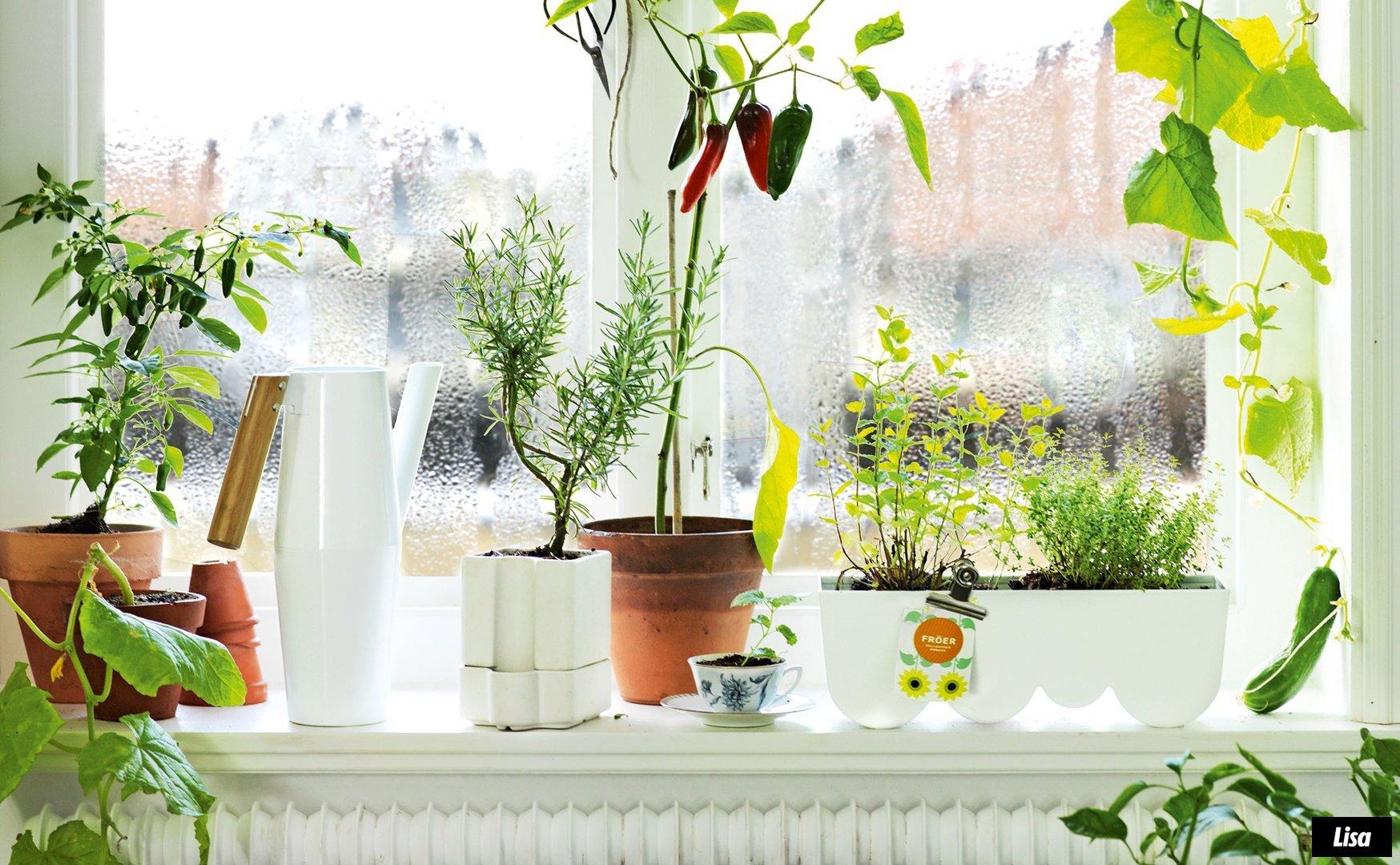 Большое количество растений на окнах помогает избавиться от чрезмерной сухости