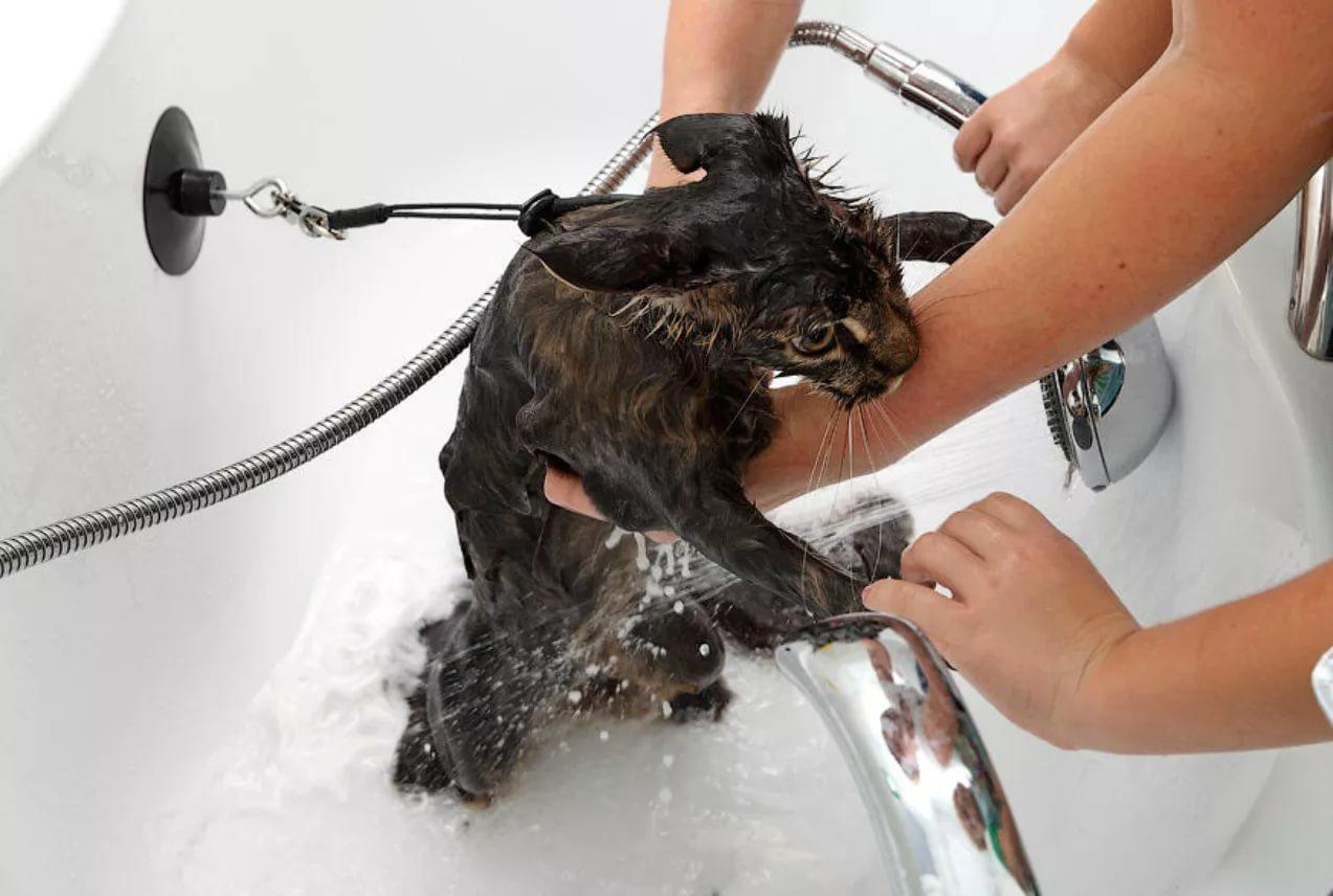 За домашним животным нужно следить и часто мыть